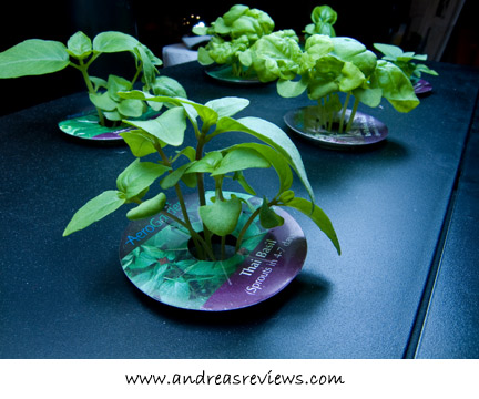 AeroGarden, Thai Basil, 20 days
