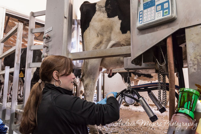 Andrea Meyers - Andrea milking cows at Al-Mara Farm, Midland, Virginia