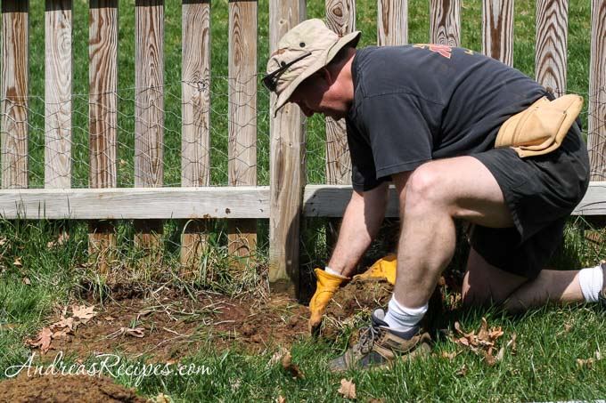 Andrea Meyers - Michael removing sod for the asparagus bed.