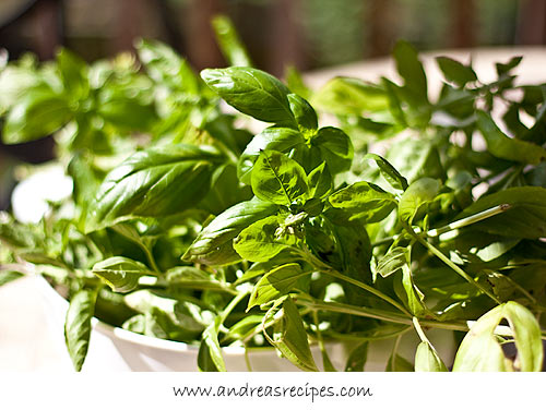 Andrea Meyers - Genovese basil