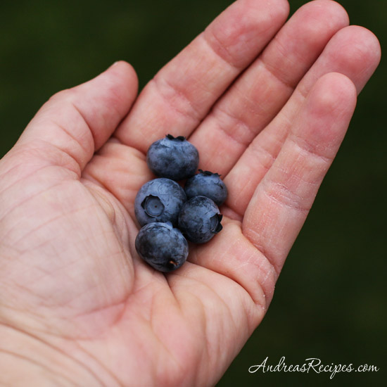Andrea Meyers - first handful of fresh picked blueberries