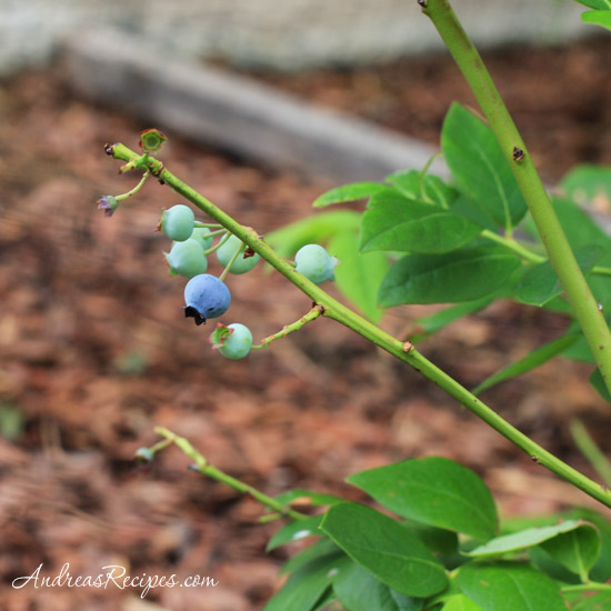 Mango Blueberry Salad Recipe With Ginger Vinaigrette