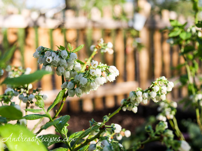 Andrea's Recipes - Blueberry Blossoms