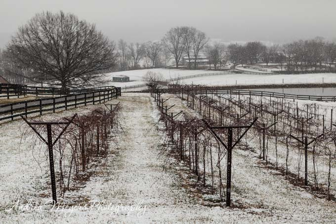 Andrea Meyers - Chrysalis Vineyards, Loudoun County, VA