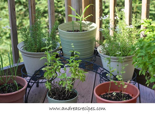 Andrea's Recipes - Container garden
