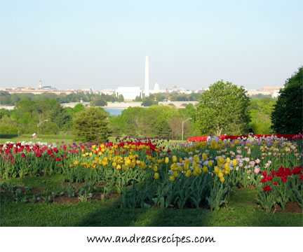 DC vista from Arlington