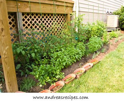 Our garden, June 21, 2008