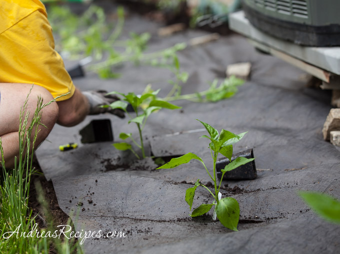 Planting Peppers and Tomatoes, May 2013 - Andrea Meyers