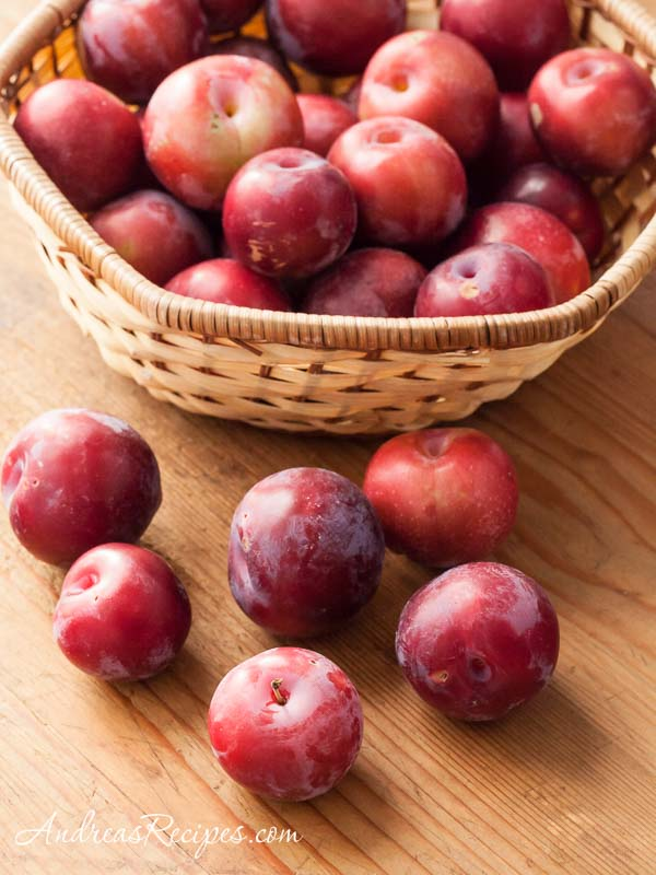 Backyard Plums - Andrea Meyers