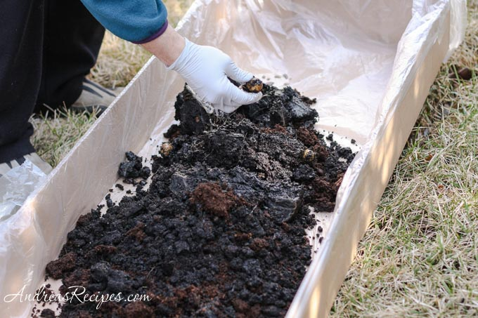 Andrea Meyers - Potted potato soil dumped out for inspection.