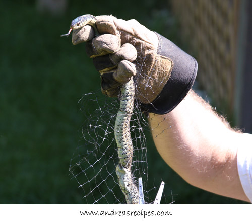 Andrea's Recipes - cutting away the netting off the snake