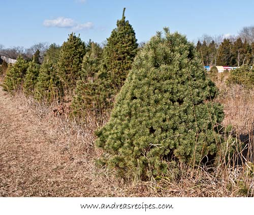 Andrea Meyers - Ticonderoga Farms Christmas Trees