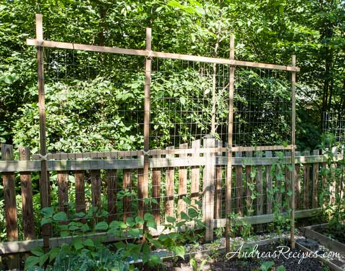 Andrea Meyers - Trellis for peas and beans.