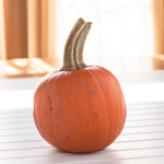 How to Roast a Pumpkin and Make Pumpkin Puree - Andrea Meyers