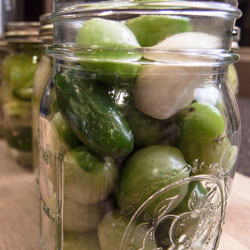 Pickled Green Tomatoes - Andrea Meyers
