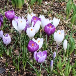 Weekend Gardening: Planning for Spring Flowers