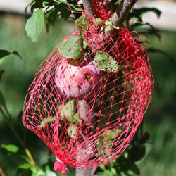 Weekend Gardening: Protecting Fruit Trees