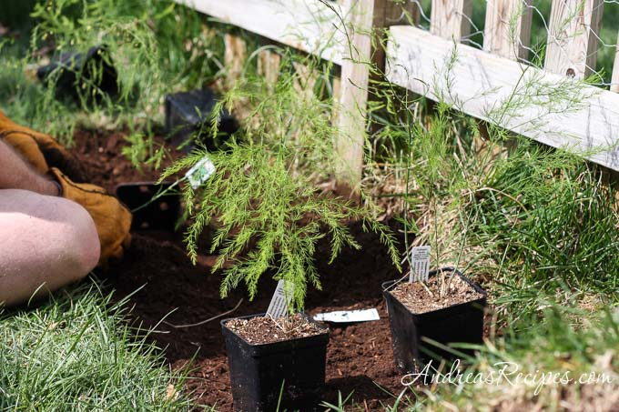 Weekend Gardening: Starting an Asparagus Bed - Andrea Meyers