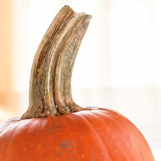 How to Roast a Pumpkin and Make Pumpkin Puree