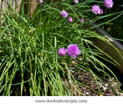 Andrea's Recipes - Chive blossoms