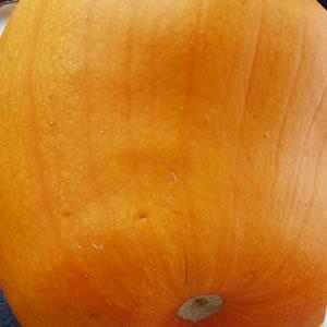 Gardenopolis - Pumpkin Curry Soup