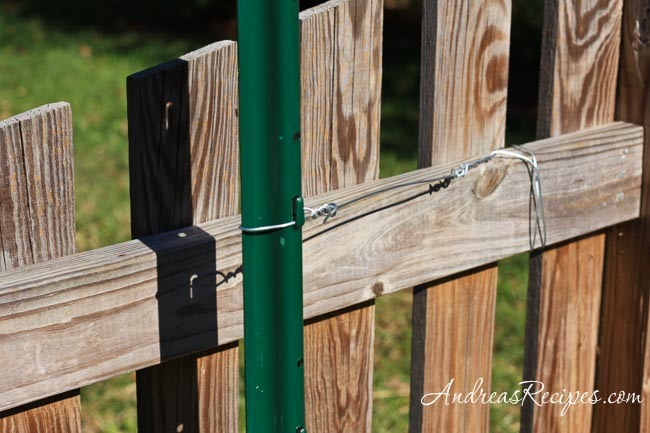 Grape trellis tied off to the fence - Andrea Meyers