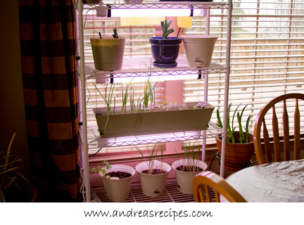 Andrea's Recipes - indoor garden