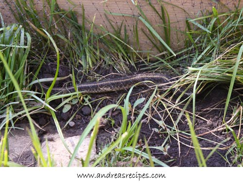 Andrea's Recipes - snake in the garden