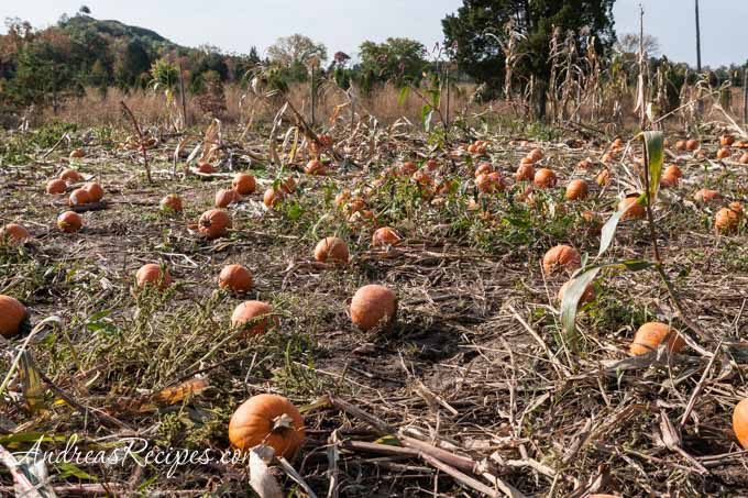 Andrea Meyers - Ticonderoga Farms pumpkin patch