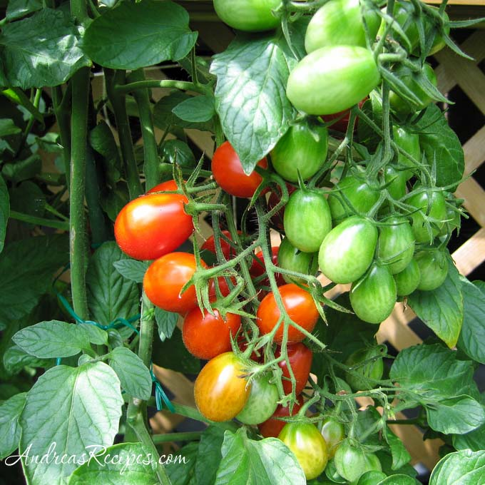 Grape tomatoes in a cluster