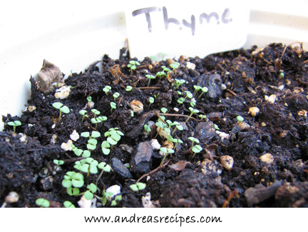 Andrea's Recipes - Thyme sprouts