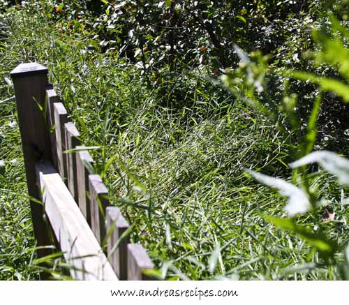 Andrea Meyers - Enormous weeds behind the fence.
