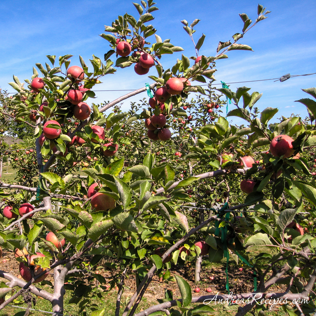 Tarara Winery apples - Andrea Meyers