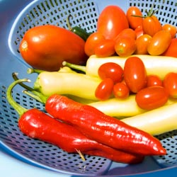 First Harvest of Summer 2008 - Andrea Meyers