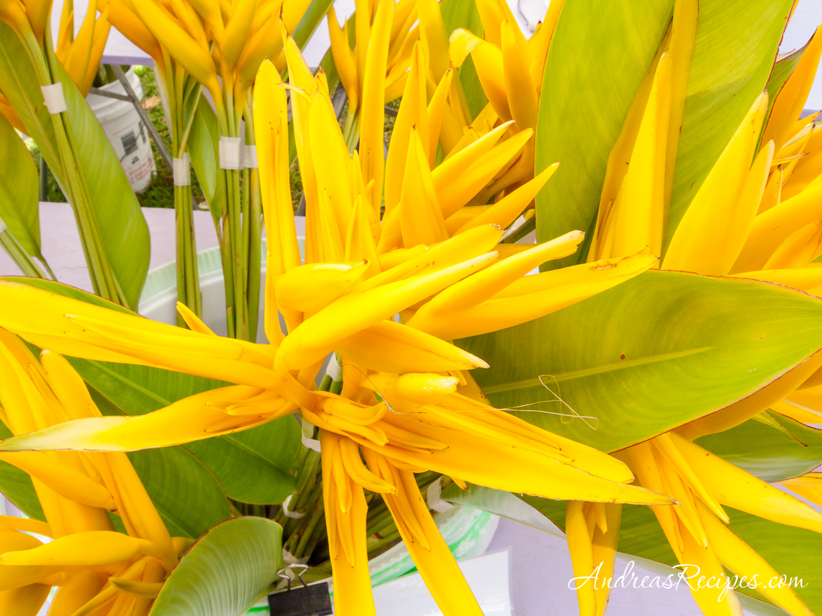 Yellow Parrot flowers at KCC Market, Hawaii - Andrea Meyers