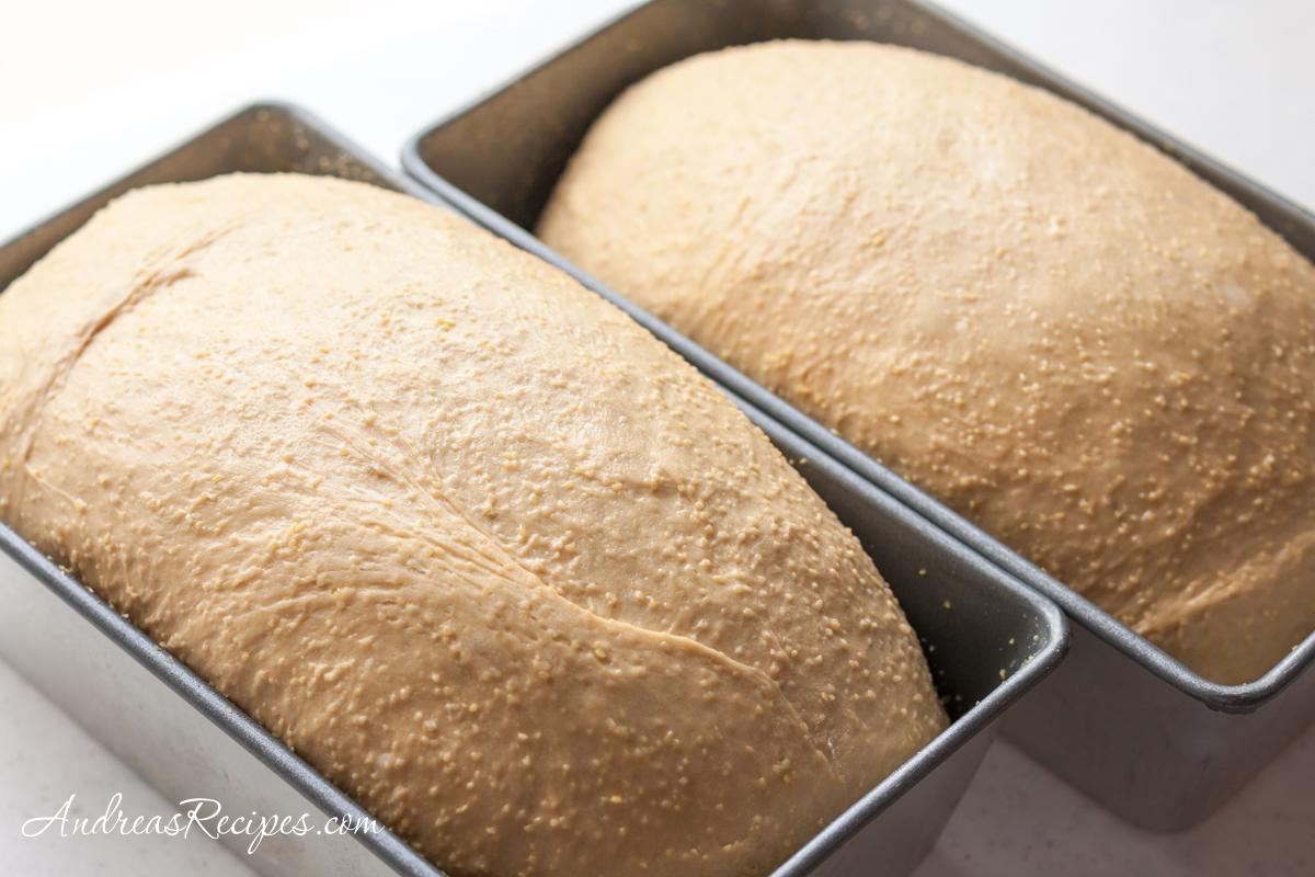 Anadama bread, shaped loaves - Andrea Meyers