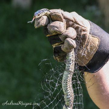 Detangling a garden snake - Andrea Meyers