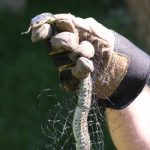 Weekend Gardening: An Unexpected Visitor