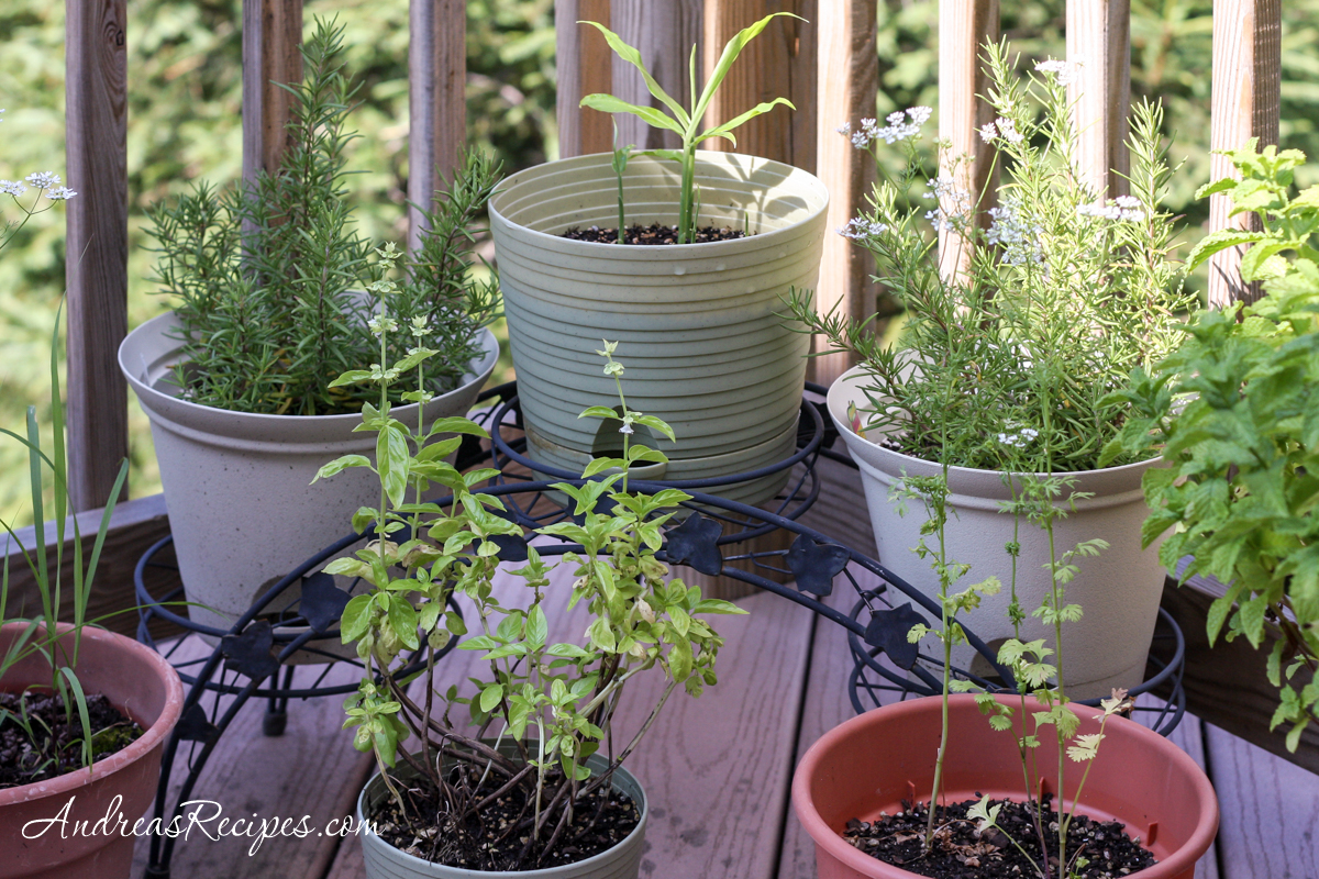 Plants in containers on our deck - Andrea Meyers