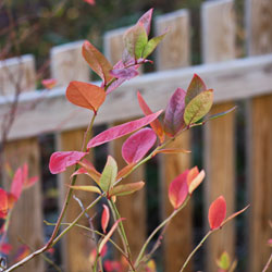 Weekend Gardening: Transition from Summer to Winter