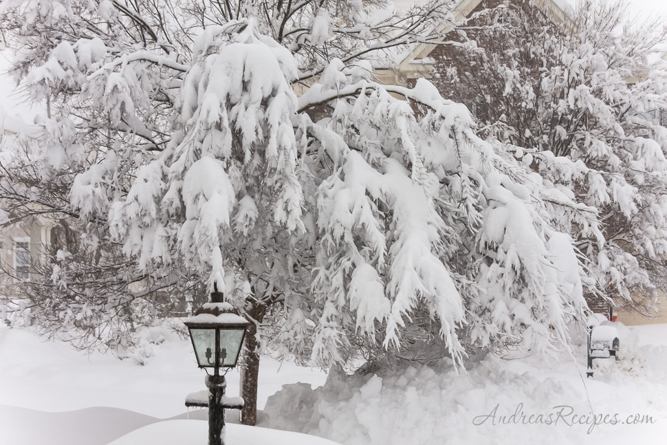 Tree in our front yard, blizzard of 2010 - Andrea Meyers
