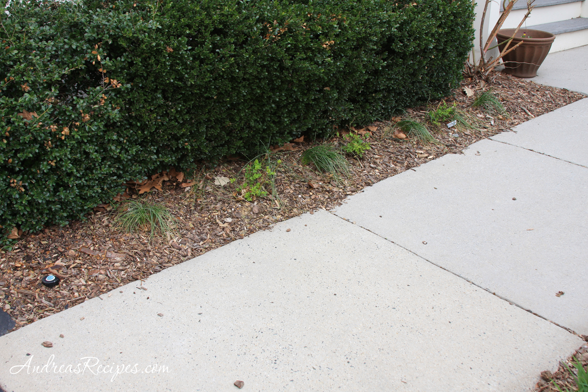 Flower bed, in front of the bushes - Andrea Meyers