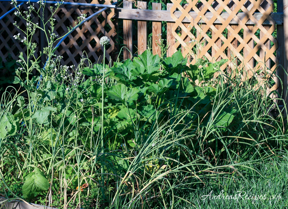 Mixed garden bed with garlic, squash, and other plants - Andrea Meyers