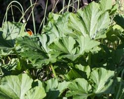 Weekend Gardening: The Mixed Bed