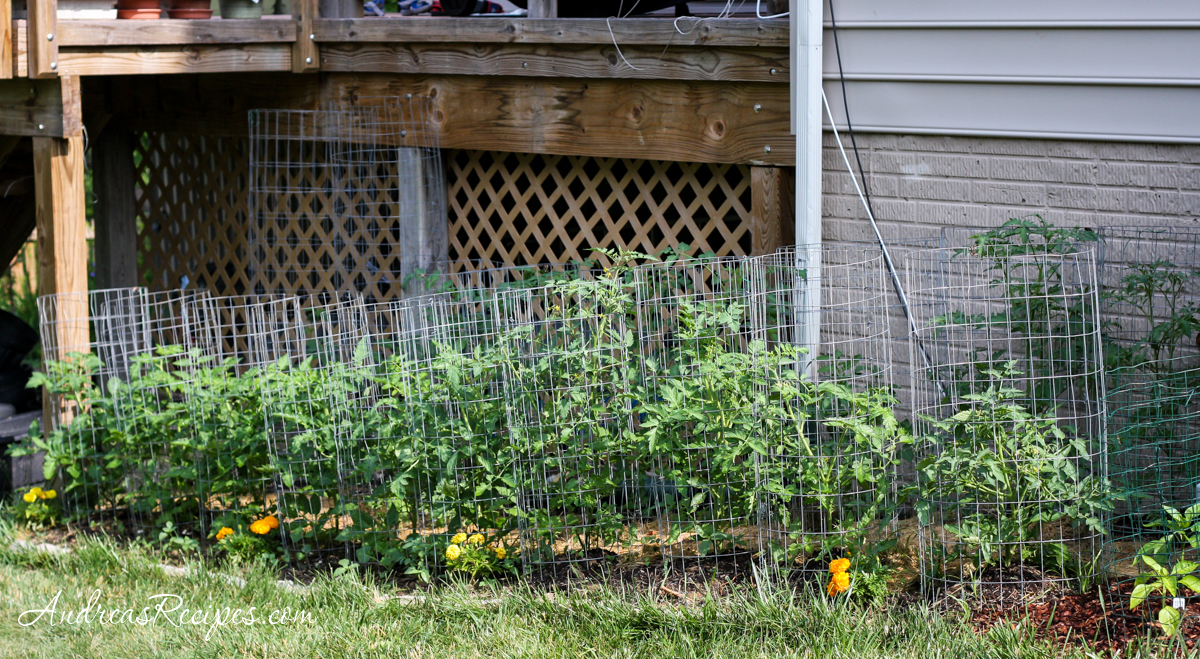 Tomato bed in our garden - Andrea Meyers