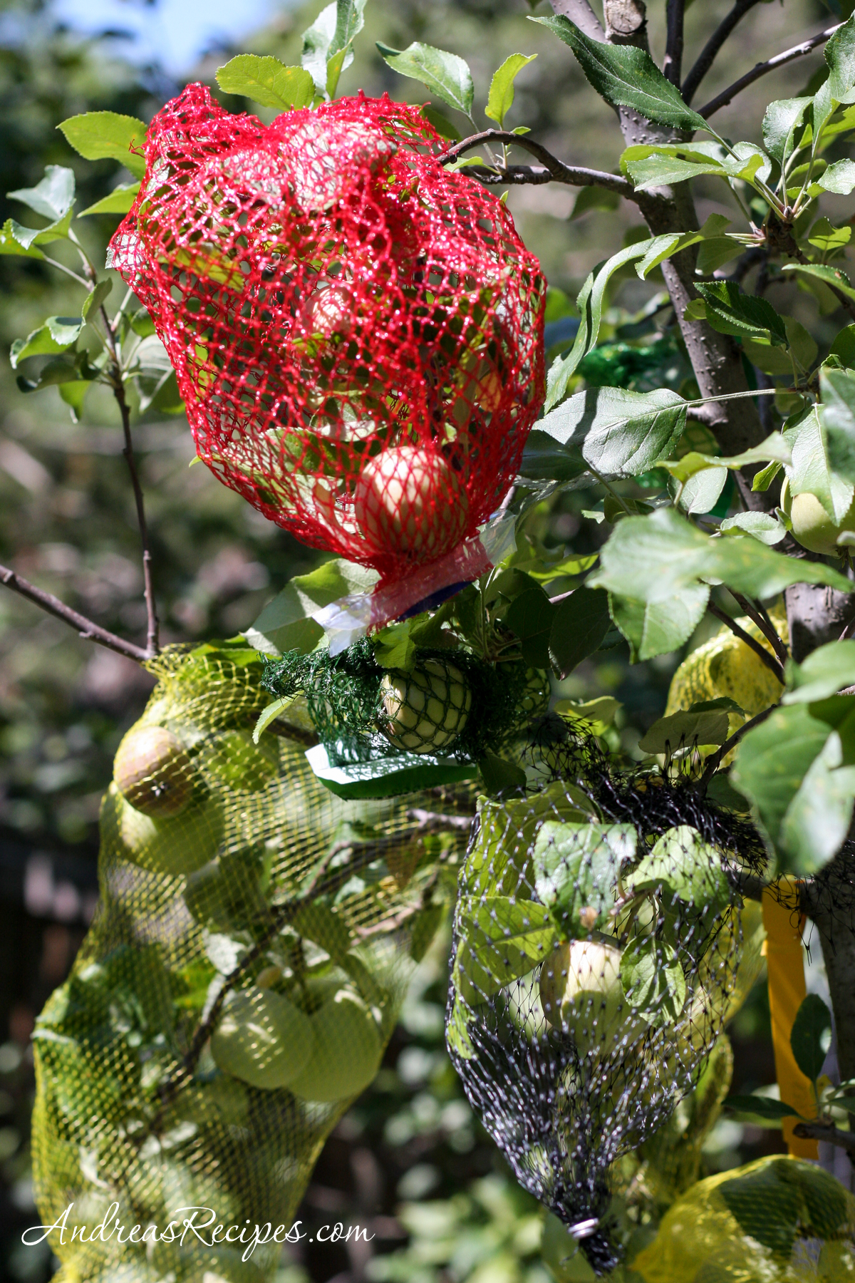 Apple tree covered with nets - Andrea Meyers