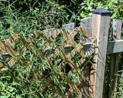 Weekend Gardening: Weed Wars