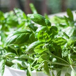 Weekend Gardening: The End of the Basil and Tomato Season