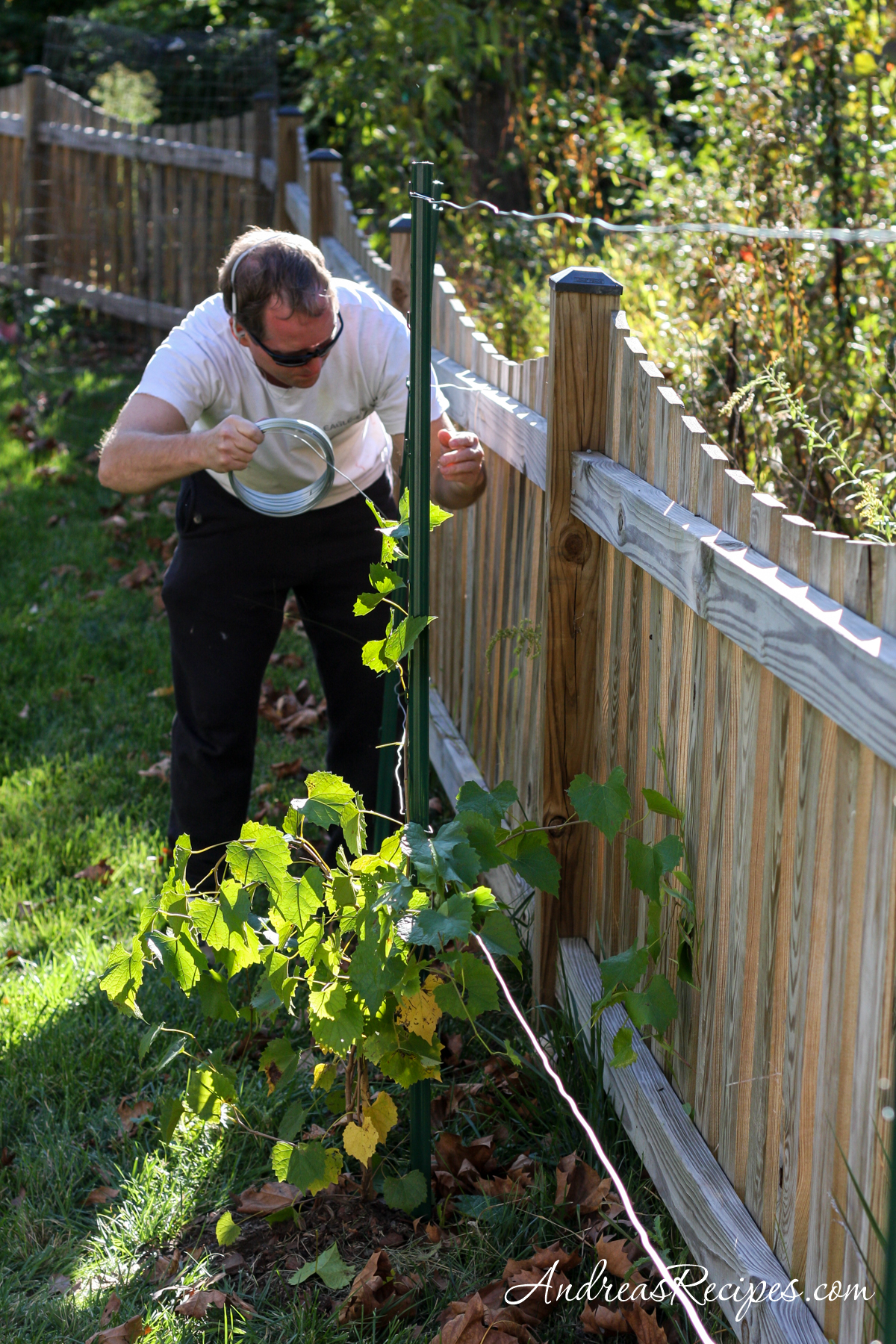 Michael setting up the grape trellis - Andrea Meyers
