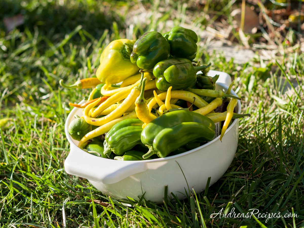 Peppers, final harvest 2010 - Andrea Meyers